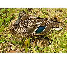 Mother & Babies Photographic Print
