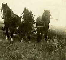 Harwood Threashing by Justine Armstrong