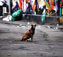 Dog by Harry Wakefield