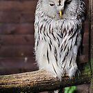 Owl by JEZ22
