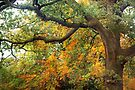 Autumn Warmth by Astrid Ewing Photography