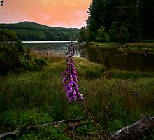 Any Time Of Day by Charles & Patricia   Harkins ~ Picture Oregon