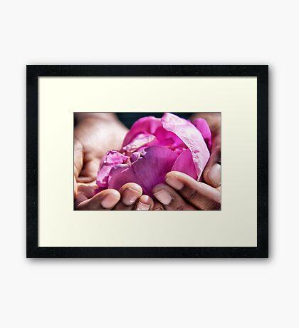 The rose of friendship Framed Print