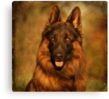 Hoss - German Shepherd Dog Canvas Print