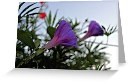 Morning Glory Garden by aprilann