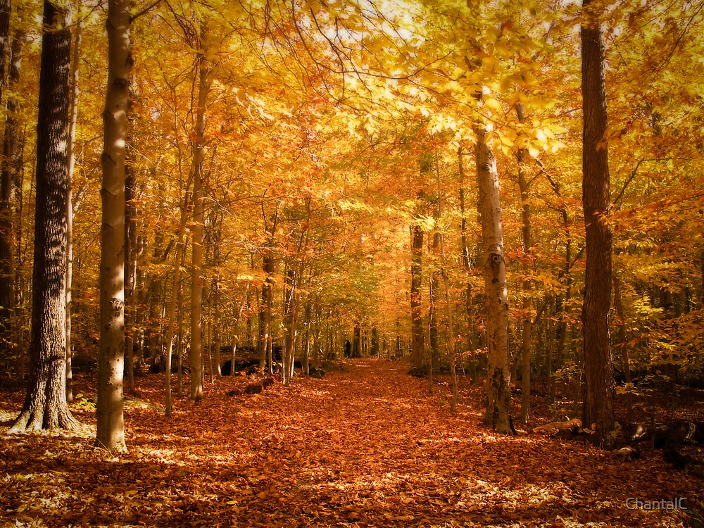 """""""Scenic Leaf Covered Path in a Yellow Mystical Fall Forest ..."""