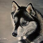 Husky - Baby Blue Eyes by Anne Zoutsos