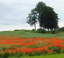 Poppy Hill by horacecornflake