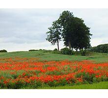 Poppy Hill Photographic Print