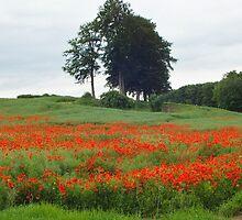 Poppy View by horacecornflake
