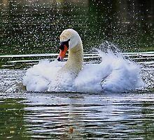 Splish Splash Taking a Bath by AnnDixon