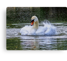 Splish Splash Taking a Bath Canvas Print