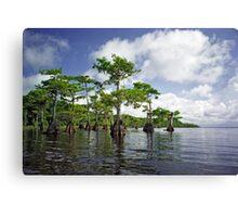 Blue Cypress Lake #1 Canvas Print