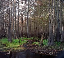 Cypress Swamp at Jane Green Creek #1. by chris kusik