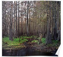 Cypress Swamp at Jane Green Creek #1. Poster