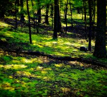 Soft Forest by Robert Zunikoff