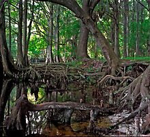 Shingle Creek #1 by chris kusik