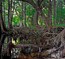 Shingle Creek #1 by chris kusik