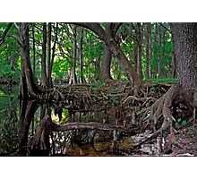 Shingle Creek #1 Photographic Print