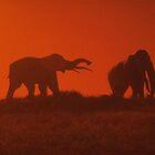 Elephant Sunset by Kuilz