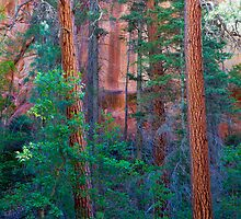 Canyon Trees by BGSPhoto