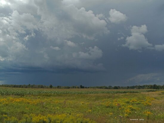 Field of corn, goldenrod and approaching storm... by linmarie