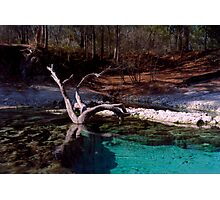 Little River Spring. Photographic Print