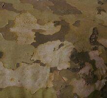 Multi-tone bark by Dinorah Imrie