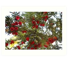 Christmas Berries Art Print