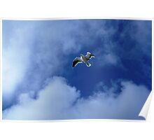 Kalk Bay seagull Poster