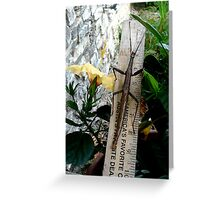 Stick on a Stick Greeting Card