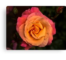 A Rose for Remembrance Canvas Print
