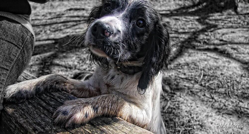 Benson muddy again by Paul Morris