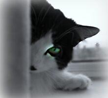 Peek-A-Boo by vic321