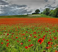 A Field of Poppies - HDR by Colin  Williams Photography