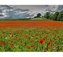 A Field of Poppies - HDR Photographic Print