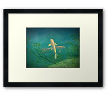 Koi Reflections Framed Print
