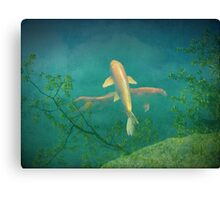 Koi Reflections Canvas Print