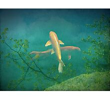 Koi Reflections Photographic Print