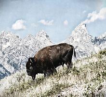 Winter Bison by Barbara D Richards