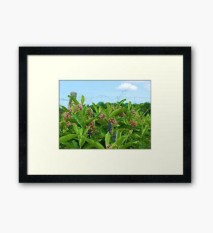 A country garden Framed Print