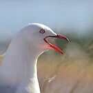 Nice seagull not :) by Jemma Richards