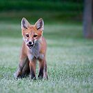 fox pup by Erin Fitzgibbon