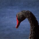 Black Swan by mosaicavenues