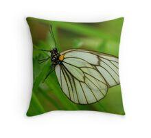 pieridae Throw Pillow