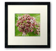 Can you find the little green bug?? Framed Print