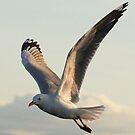 In Flight by Neville Gafen