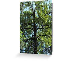 Balsam Poplar Crown Greeting Card