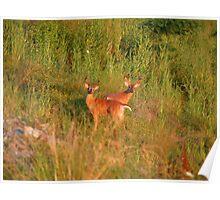 Sunset Bucks Poster