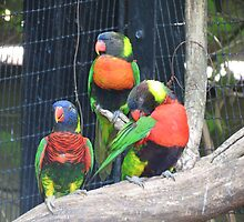 Lorikeet Trio by Ron Russell